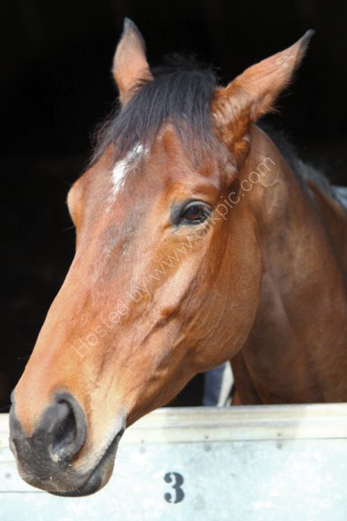 Masterminded favourite for the Queen Mother Champion chase @ Cheltenham.