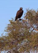Namibia - Around the country 2014