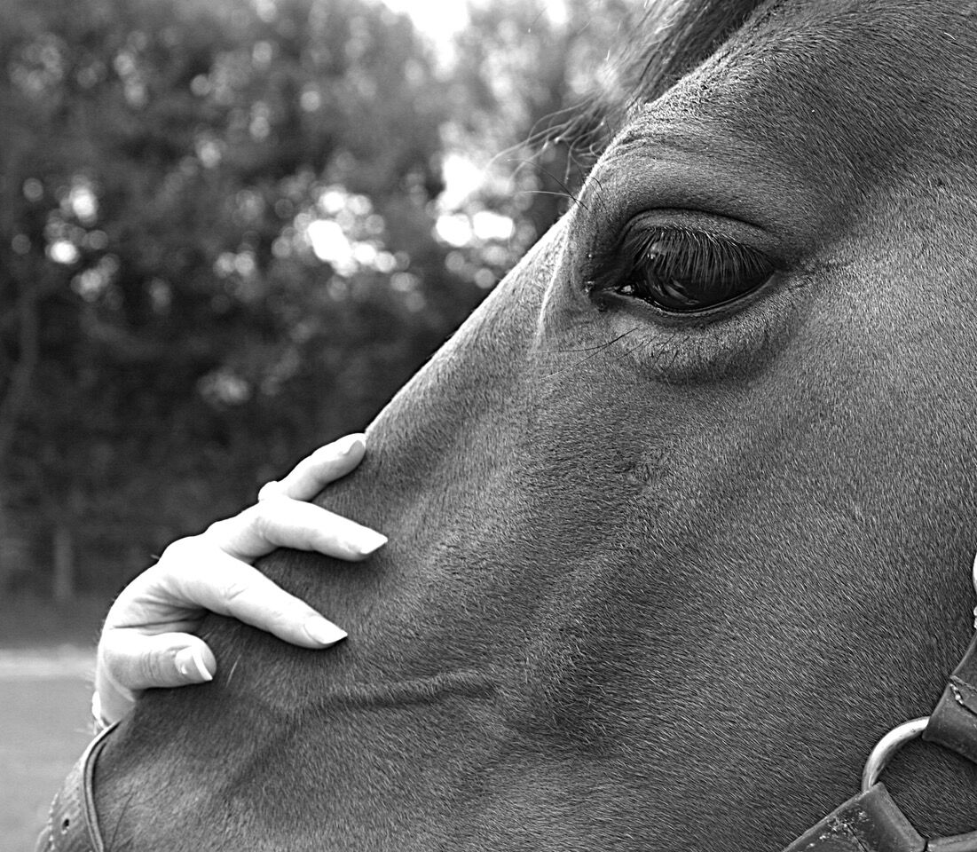 Horses Head - Commended