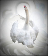 Dance of the Swan