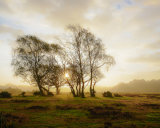 Dawn Mist at Longcross