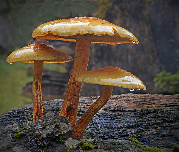 Fungi  Peter Street