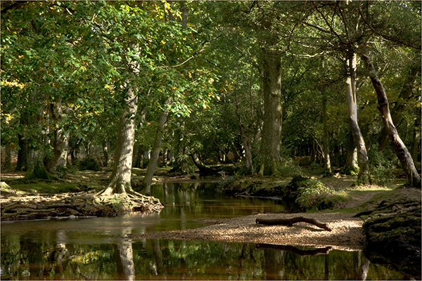 Ober Water New Forest