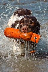 Water Work