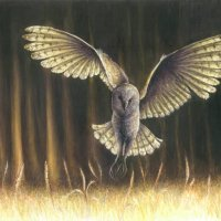 Barn Owl by Elly Eveleigh