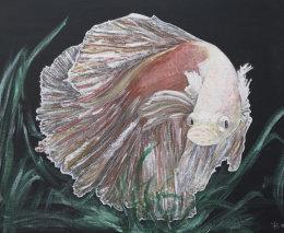 Iridescent Siamese Fighting Fish