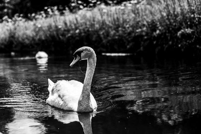 Cob Swan