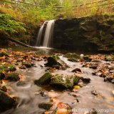 Blow Gill