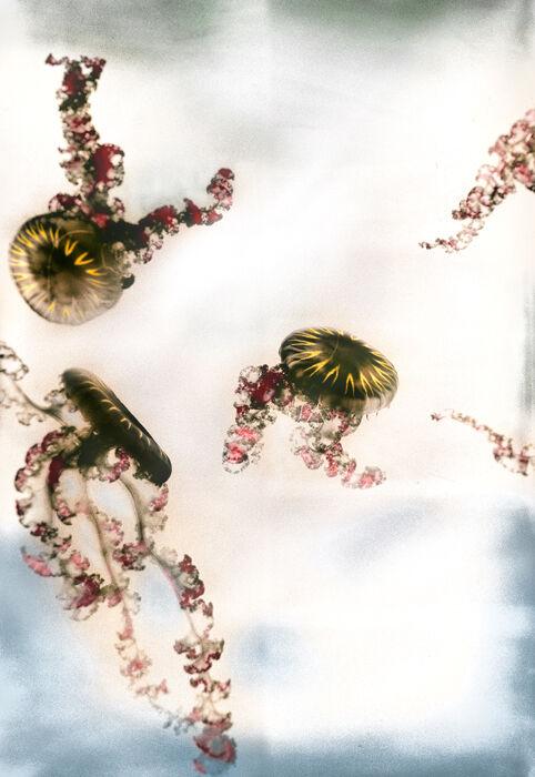 Jellyfish Two