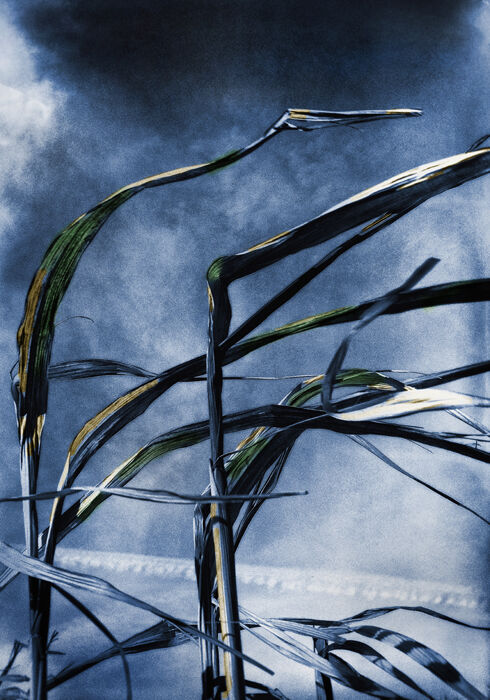 Reeds at St Anns Well