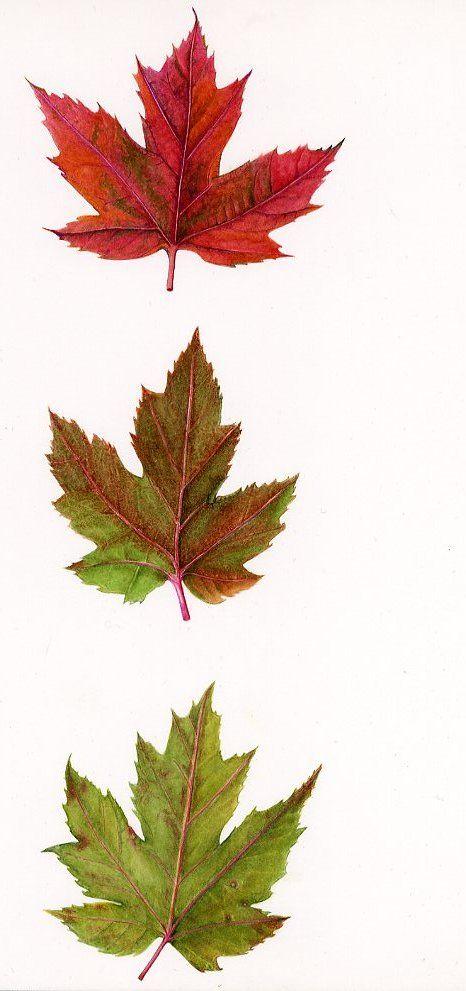 New England Fall Leaves I