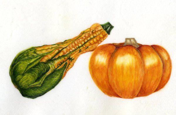 Munchkin & Ornamental Gourd