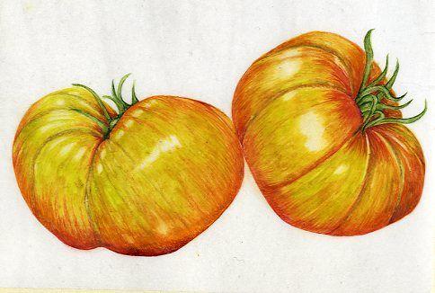 Pineapple Tomato      SOLD