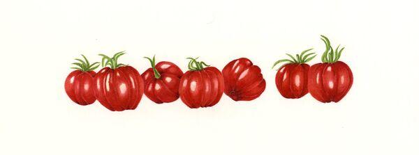 Tiny Ribbed Tomatoes