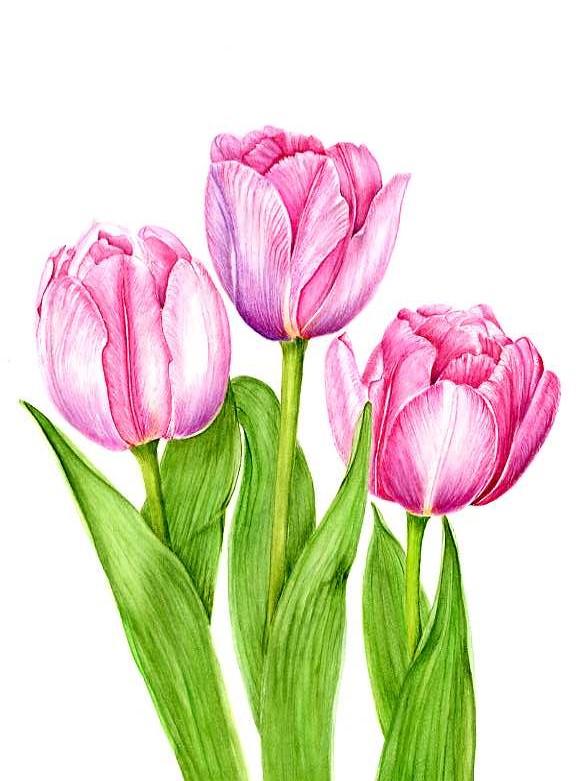 "Tulip ""Foxtrot""   SOLD"