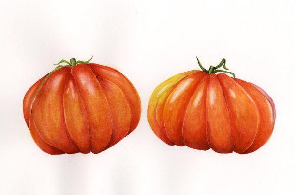 Tomato Double