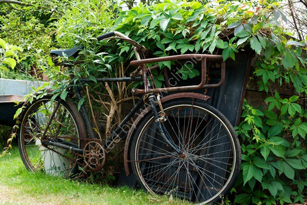 Bike,  Alric Allotments,  London