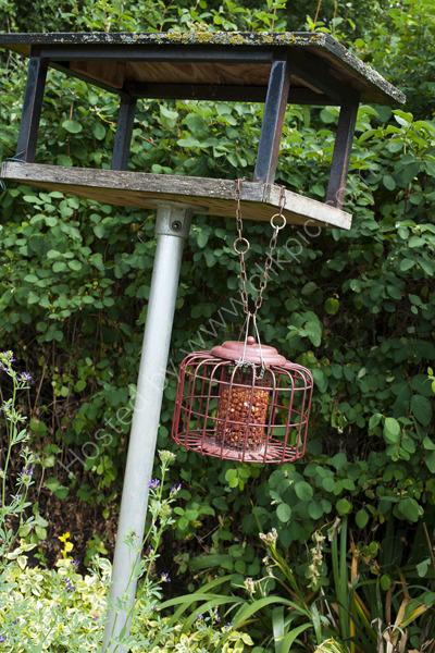 Bird Feeder,  Alric Allotments,  London