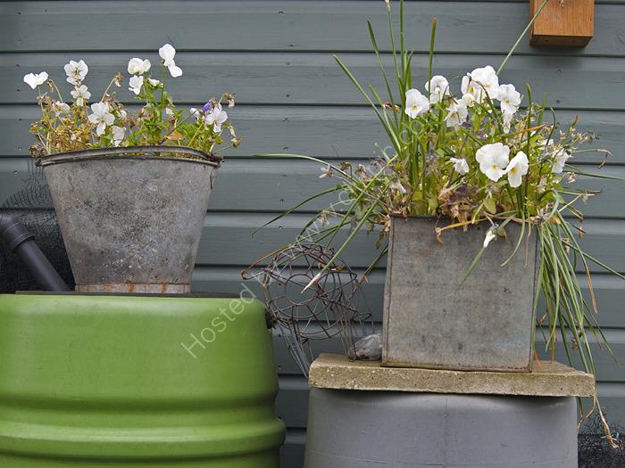 Flower buckets,  Alric Allotments,  London