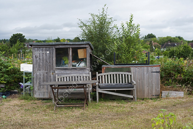 Time for tea,  Alric Allotments,  London