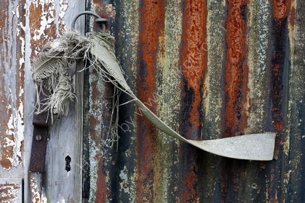 Shed door,  Alric Allotments,  London
