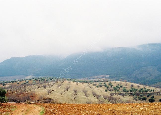 Olive groves, Dilar Spain