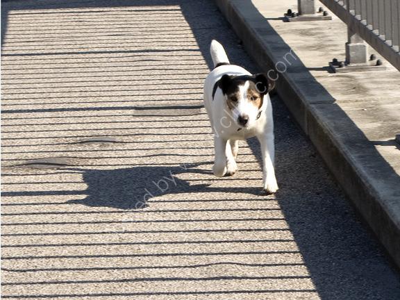Walking Dog, Munich, Germany