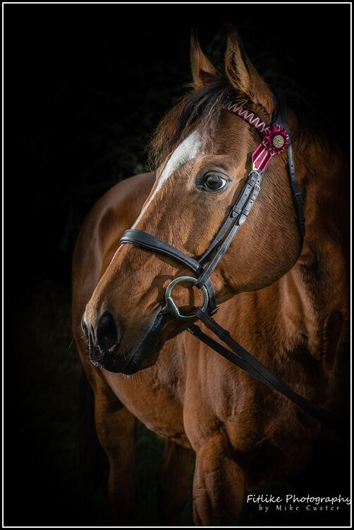 Equine-Photography-Moray-Photographers-02