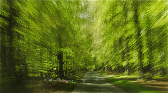 Trees at 40mph