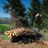 Forestry Work In Perthshire