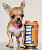 Smallest dog