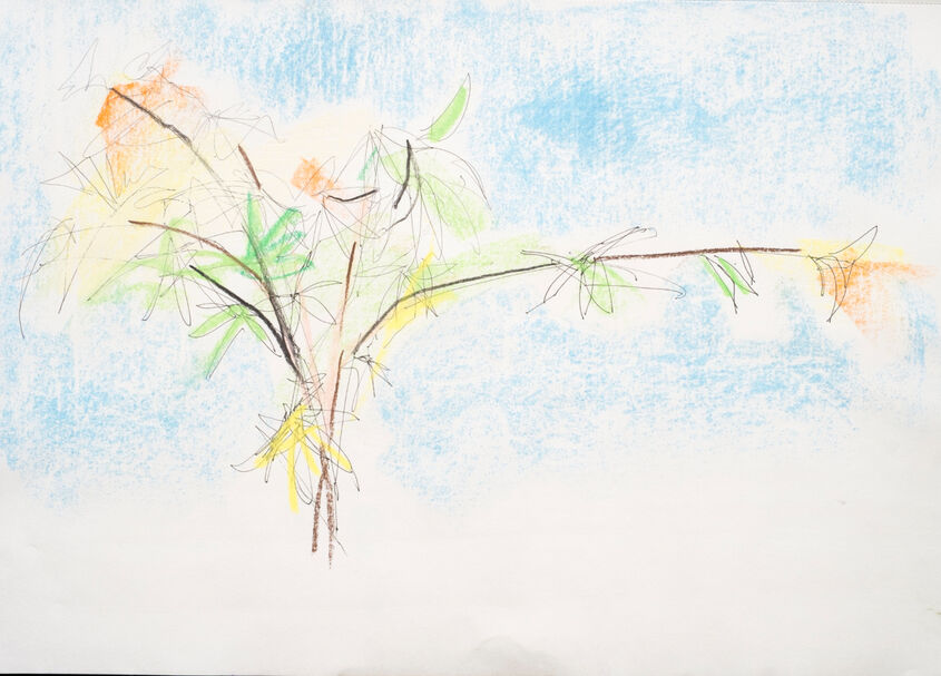 Acer, pen and soft pastel.