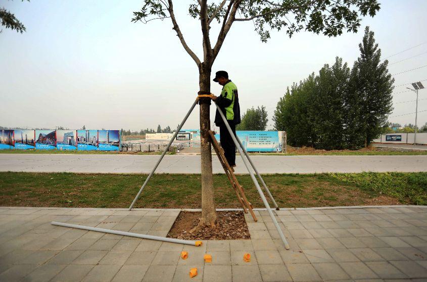 XIONG'AN TREE PLANTING, RONGCHEN, CHINA