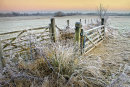Frosty Meadows