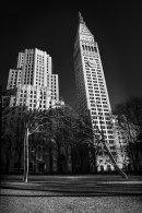 Steel Trees of Manhattan