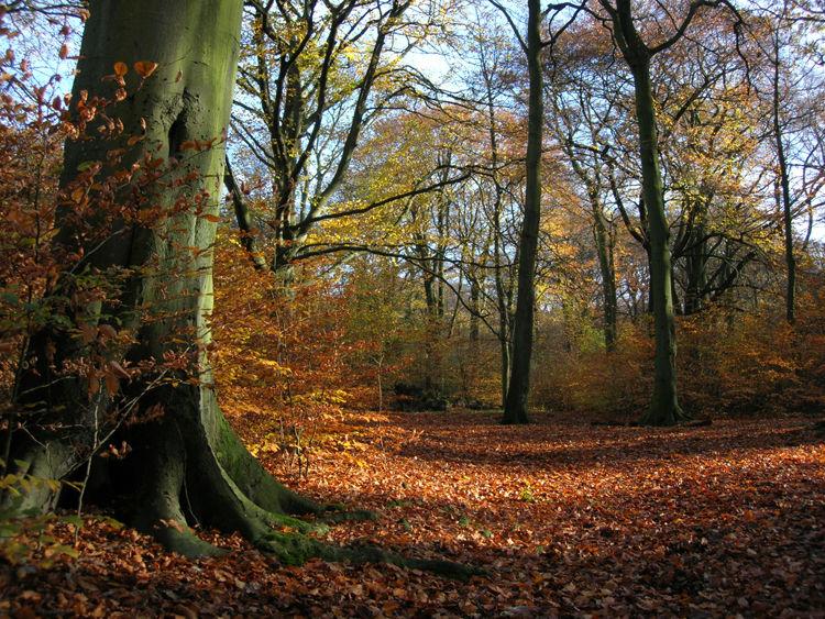 Autumn in Haigh Hall Plantations