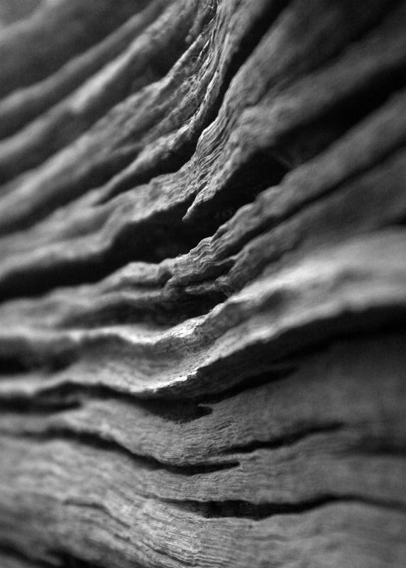 Erosion on tree trunk
