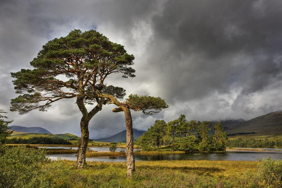 Tulla tree 2