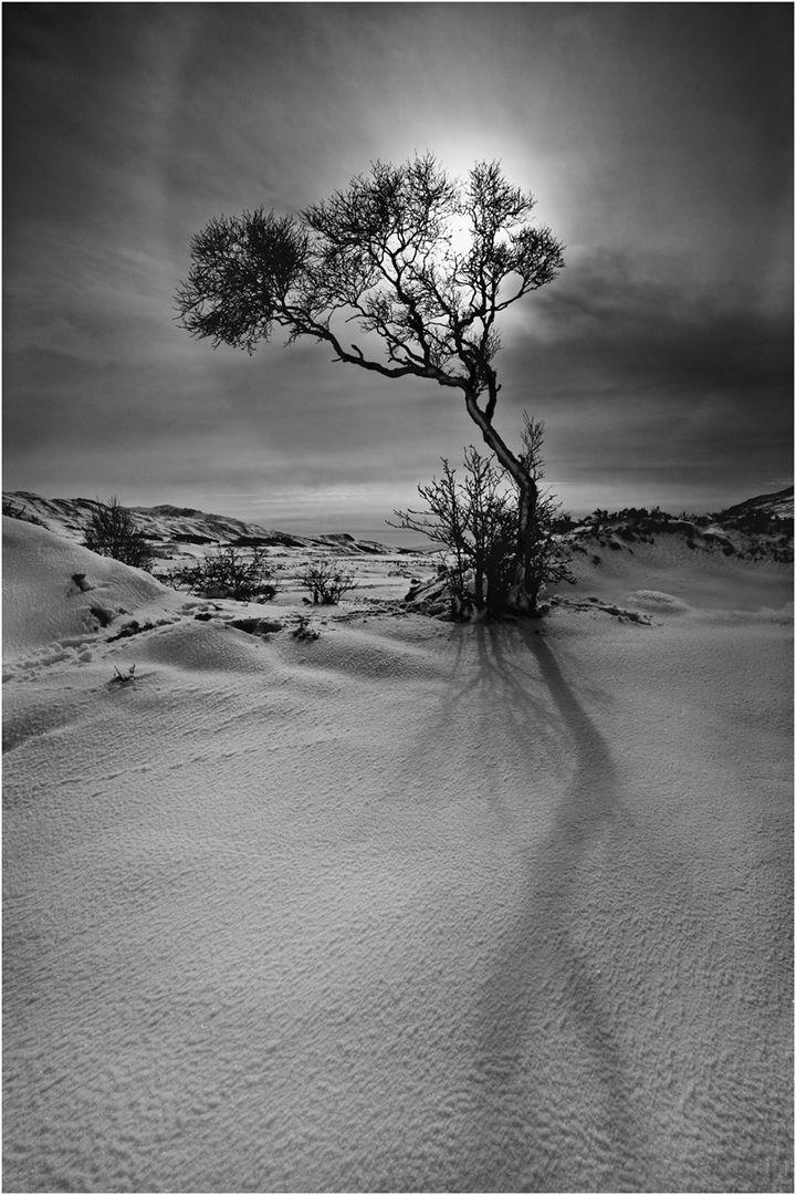 Rannoch Tree