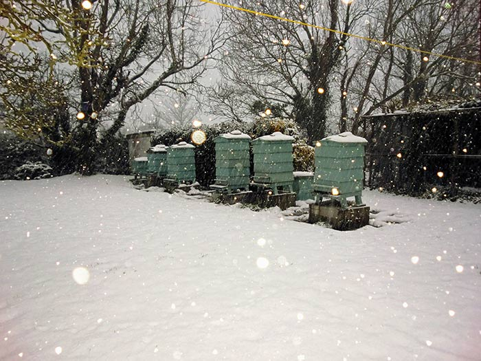 Guernsey Bee Hives In February 2018