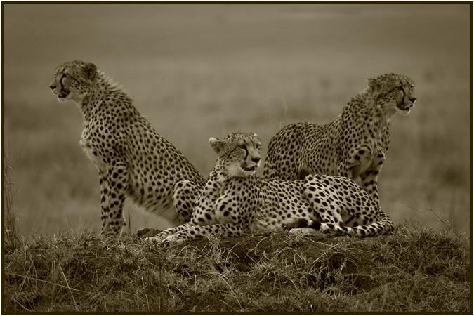 Shakirah & cubs