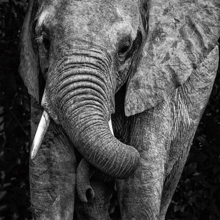 Flexible trunk in action