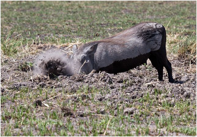 Warthog spring cleaning
