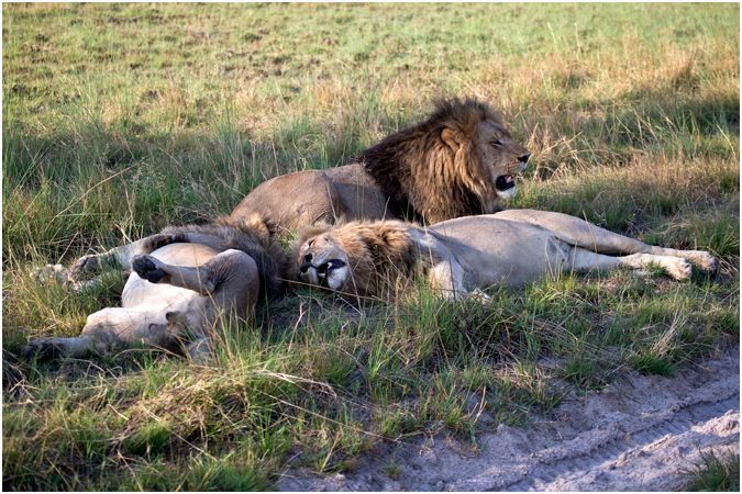 Males Sleeping