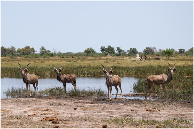 Male Kudo Group