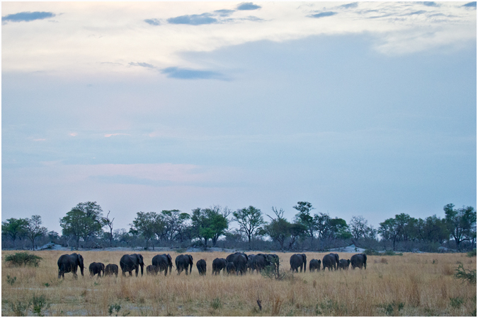Large Herd Heading Home