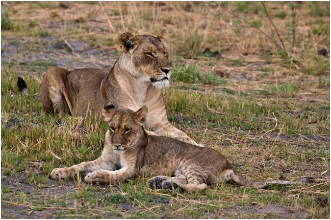 Mother & her Cub
