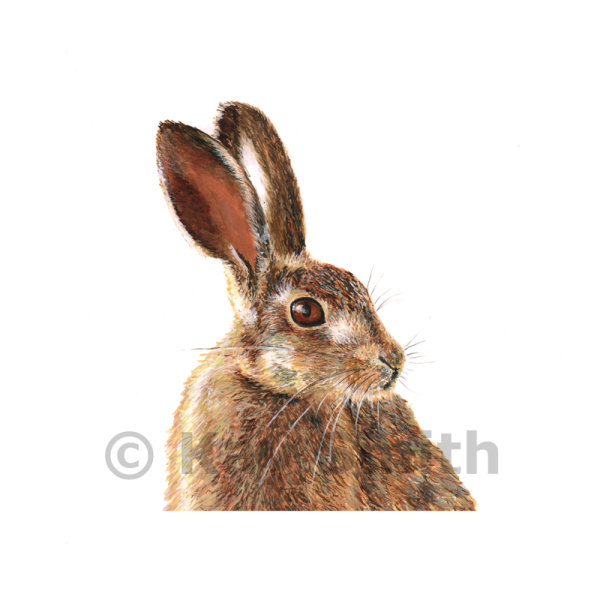 Dunster Hare