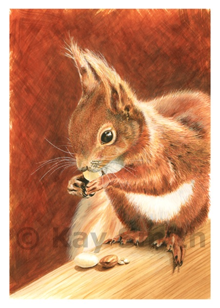 Nutmeg - Red Squirrel.
