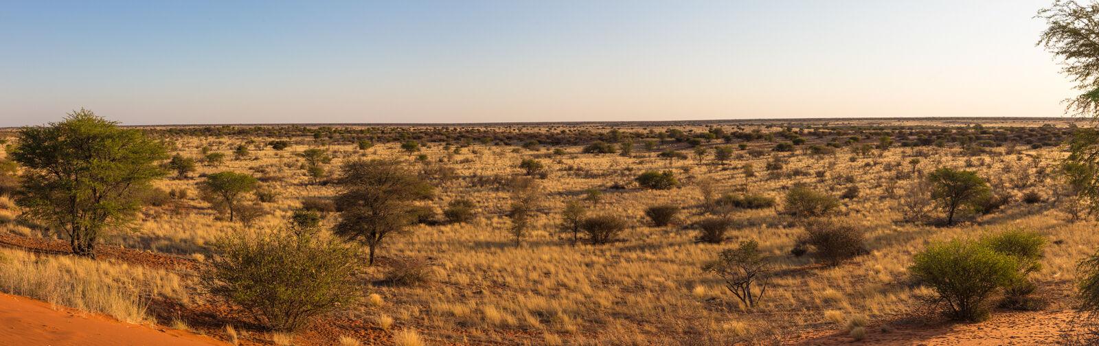 The Kalahari desert, Namibia.